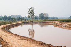 Campo di grano nel periodo di siccità, Tailandia Immagine Stock