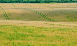 Campo di grano ondeggiante 2 fotografie stock