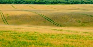 Campo di grano ondeggiante 3 fotografia stock