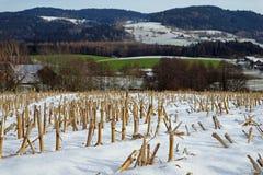 Campo di grano raccolto nell'inverno con le montagne nel fondo immagine stock