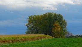 Campo di grano sulla collina con il bosco ceduo Immagine Stock