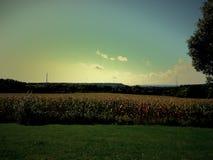 Campo di grano in Wisconsin Immagini Stock