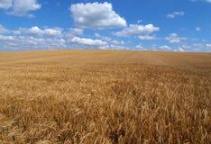 Campo di granulo Fotografia Stock Libera da Diritti
