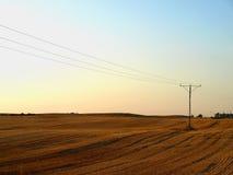Campo di granulo al tramonto Fotografia Stock Libera da Diritti