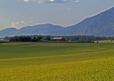 Campo di granulo, azienda agricola, granaio e montagne Fotografia Stock Libera da Diritti
