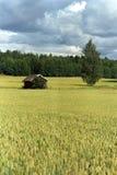 Campo di granulo finlandese Fotografia Stock