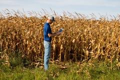 Campo di Inspecting Corn dell'agricoltore Fotografia Stock