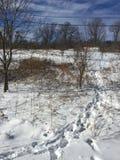 Campo di inverni Immagine Stock