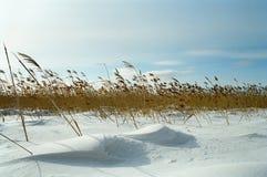 Campo di inverno Fotografie Stock Libere da Diritti