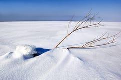 Campo di inverno Fotografie Stock