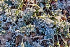 Campo di inverno con le foglie congelate Fotografie Stock