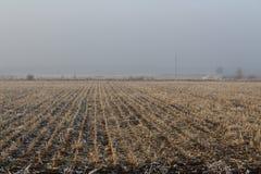 Campo di inverno con le piante asciutte fotografia stock