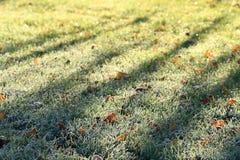 Campo di inverno dell'erba verde Immagine Stock