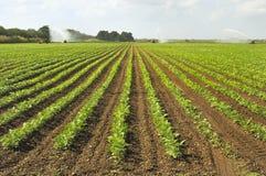 Campo di irrigazione Fotografia Stock Libera da Diritti