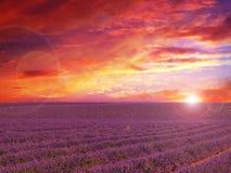 Campo di Lavander con il tramonto di stupore fotografia stock