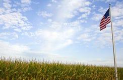 Campo di mais americano Fotografia Stock Libera da Diritti