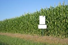 Campo di mais con il segno bianco Immagini Stock