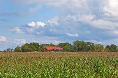 Campo di mais con l'azienda agricola Fotografia Stock Libera da Diritti