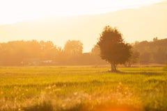 Campo di mais con terreno coltivabile al tramonto Immagini Stock