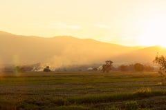 Campo di mais con terreno coltivabile al tramonto Fotografia Stock