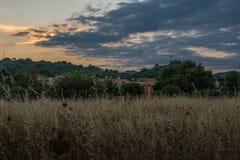 Campo di mais di estate al crepuscolo con il cielo painterly Immagini Stock