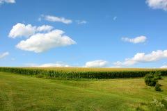 Campo di mais e cielo blu Immagini Stock
