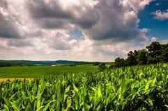 Campo di mais e Rolling Hills della contea di York del sud rurale, PA Fotografia Stock