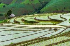 Campo di mais ed azienda agricola Immagini Stock Libere da Diritti