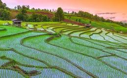 Campo di mais ed azienda agricola Fotografie Stock