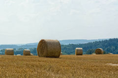 Campo di mais falciato con le balle della paglia Fotografia Stock