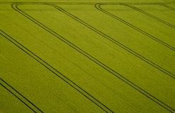 Campo di mais, foto aerea Fotografie Stock Libere da Diritti