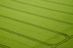 Campo di mais, foto aerea Immagini Stock Libere da Diritti