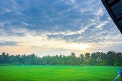 Campo di mais di mattina alla Tailandia, bello campo di mais verde con il fondo del cielo di tramonto Immagini Stock Libere da Diritti
