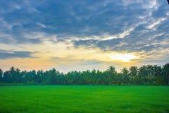 Campo di mais di mattina alla Tailandia, bello campo di mais verde con il fondo del cielo di tramonto Fotografie Stock Libere da Diritti