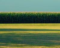 Campo di mais nel midwest Immagine Stock Libera da Diritti