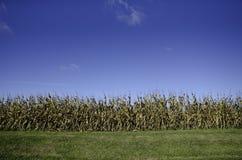 Campo di mais nel Midwest Immagini Stock