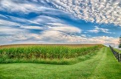 Campo di mais nella fine dell'estate sotto cielo blu Fotografie Stock Libere da Diritti