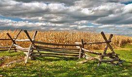 Campo di mais rurale in autunno Fotografie Stock