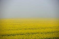 Campo di nebbia Immagine Stock Libera da Diritti