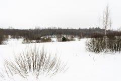 Campo di neve e foresta, giorno dell'annuvolamento di inverno immagini stock