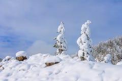 Campo di neve sopra il pendio di montagna con i pini gelidi sui precedenti della foresta e delle colline di taiga sotto cielo blu Fotografia Stock