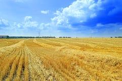 Campo di pendenza di grano Immagine Stock Libera da Diritti
