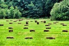 Campo di pendenza verde ed i covoni di fieno Immagini Stock