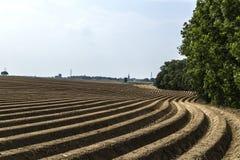 Campo di produzione delle patate in molla in anticipo fotografie stock