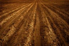 Campo di recente arato dell'azienda agricola per agricoltura fotografia stock libera da diritti