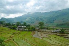 Campo di risaia Fotografie Stock Libere da Diritti