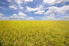 Campo di risaia Fotografia Stock