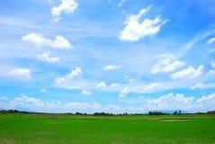 Campo di risaia Fotografie Stock