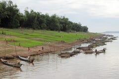 Campo di risaia sul Riverbank del Mekong Fotografia Stock