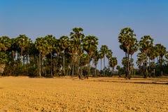 Campo di risaia in Tailandia Fotografie Stock Libere da Diritti